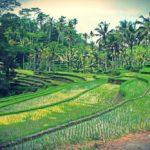 Ubud, Bali – Indonésia | Guia e Dicas de Viagem