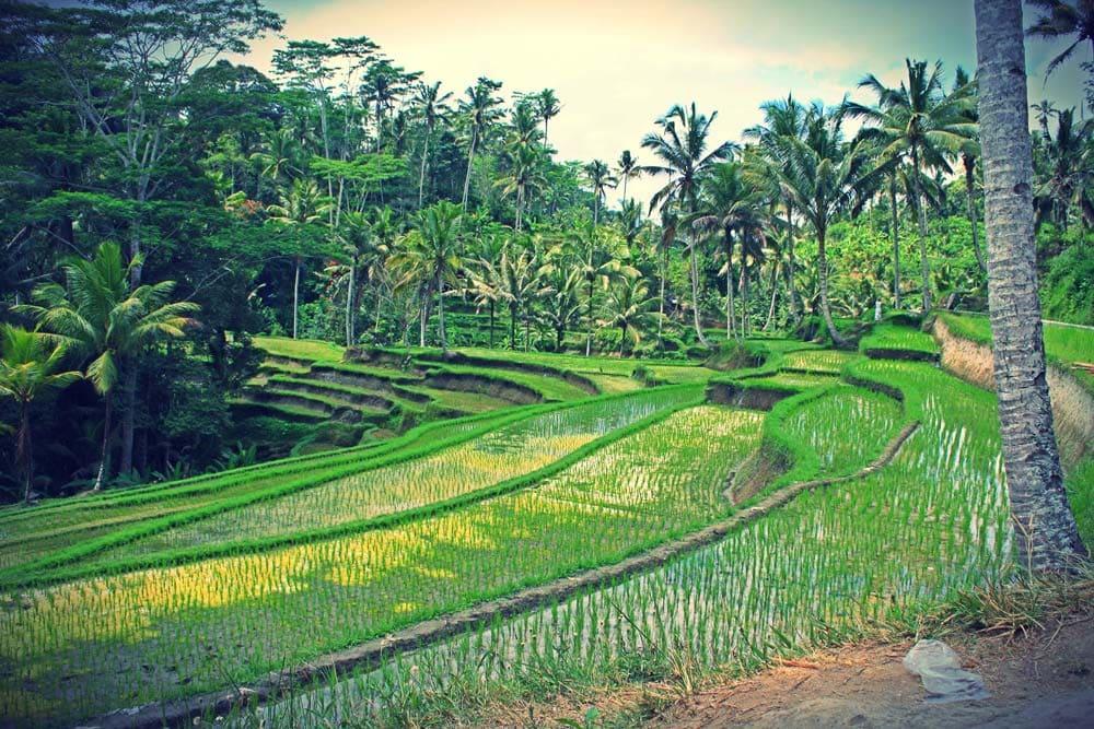 Ubud Indonésia