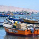 Peru   Paracas
