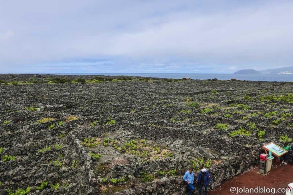 Lagido da Criação Velha, Ilha do Pico, Açores