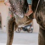 Turismo Responsável: 7 Atividades Turísticas com Animais a evitar
