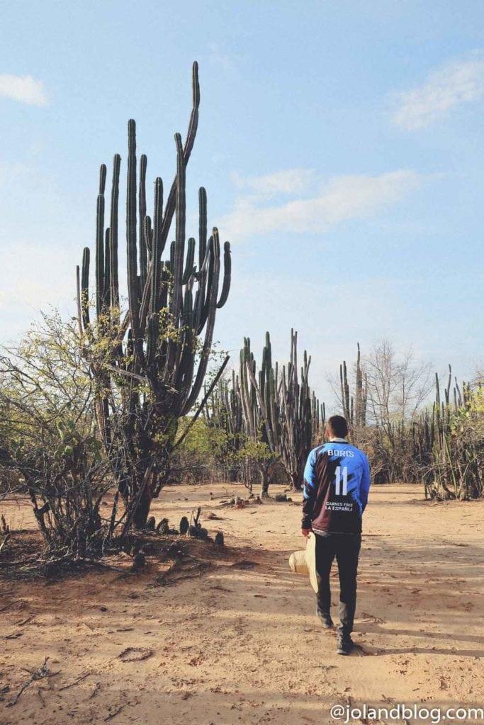 Cato no Deserto de Tatacoa na Colômbia