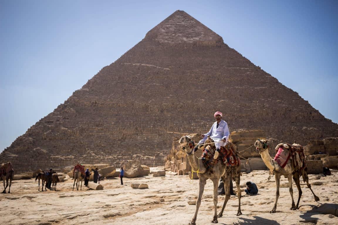 Camelos no Egito com pirâmide de fundo