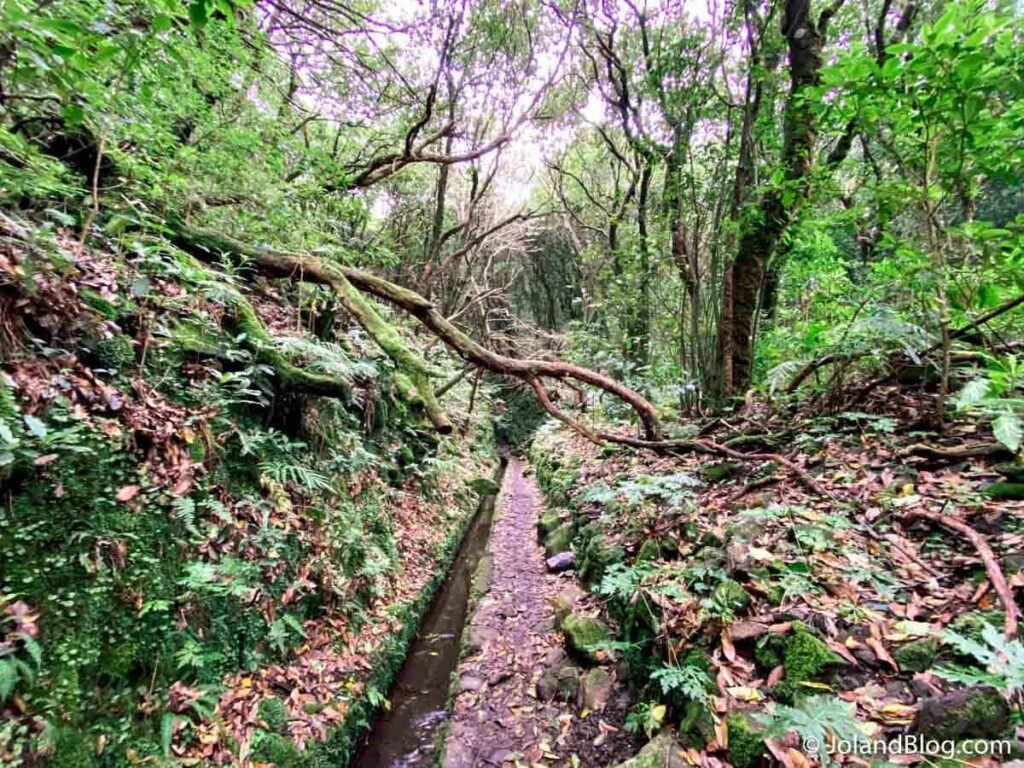 Levada do Caldeirão Verde/Caldeirão do Inferno | O que ver e fazer na Ilha da Madeira